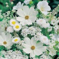 """Алмазная вышивка-мозаика """"Белые полевые цветы"""""""