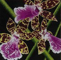 """Вышивка крестом """"Орхидеи Зигопеталум"""""""