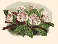 "Картина по номерам ""Дикие орхидеи"" (400x500 мм; арт. MG208)"