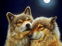 """Алмазная вышивка-мозаика """"Волк и волчица"""" (600х450 мм)"""