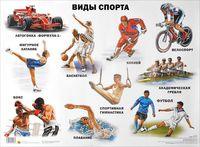 Виды спорта. Плакат