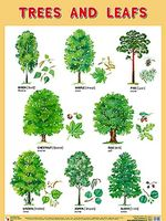 Trees and Leafs. Плакат