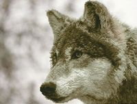 """Алмазная вышивка-мозаика """"Волк"""" (400x500 мм)"""