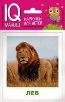 Животные жарких стран. Набор карточек для детей