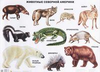 Животные Северной Америки. Плакат