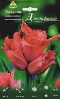 "Тюльпан бахромчатый многоцветковый ""Джетфайер"""
