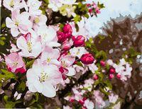 "Картина по номерам ""Майское цветение"" (400х500 мм; арт. PC4050137)"