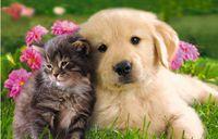 """Пазл """"В мире животных. Котенок и щенок на травке"""" (160 элементов)"""