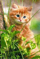 """Пазл """"В мире животных. Котенок в траве"""" (250 элементов)"""