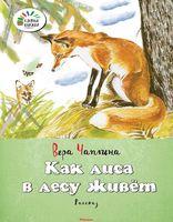 Как лиса в лесу живет