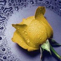 """Алмазная вышивка-мозаика """"Желтая Роза"""""""